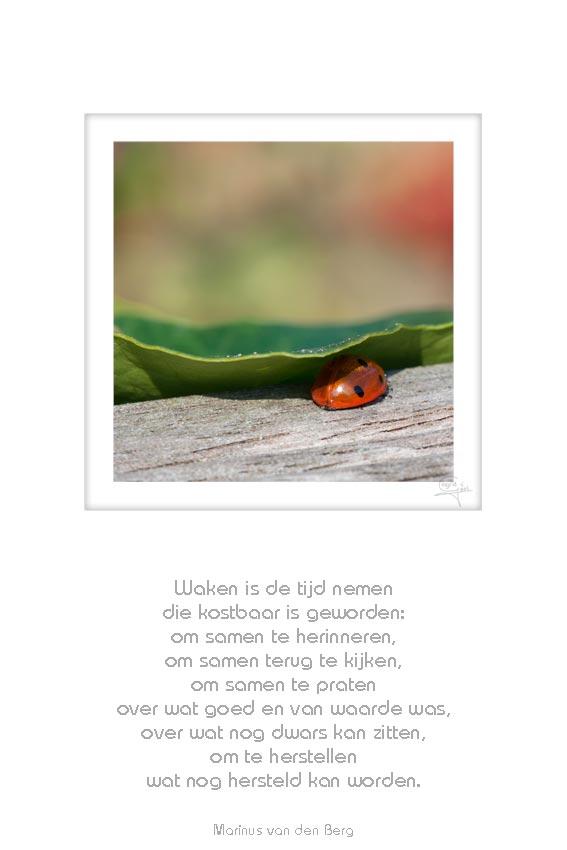 01-lieveheersbeestje-waken-is-de-tijd-marinus-50x75cm-14042012-web