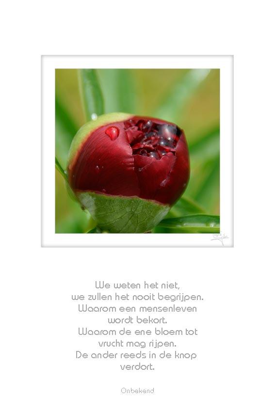 10-bloem-knop-we-weten-het-niet-onbekend-foto-basis-72-50x75cm-14042012-web
