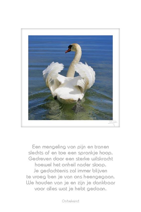 20-zwaan-een-mengeling-van-pijn-onbekend-50x75cm-10052012-web