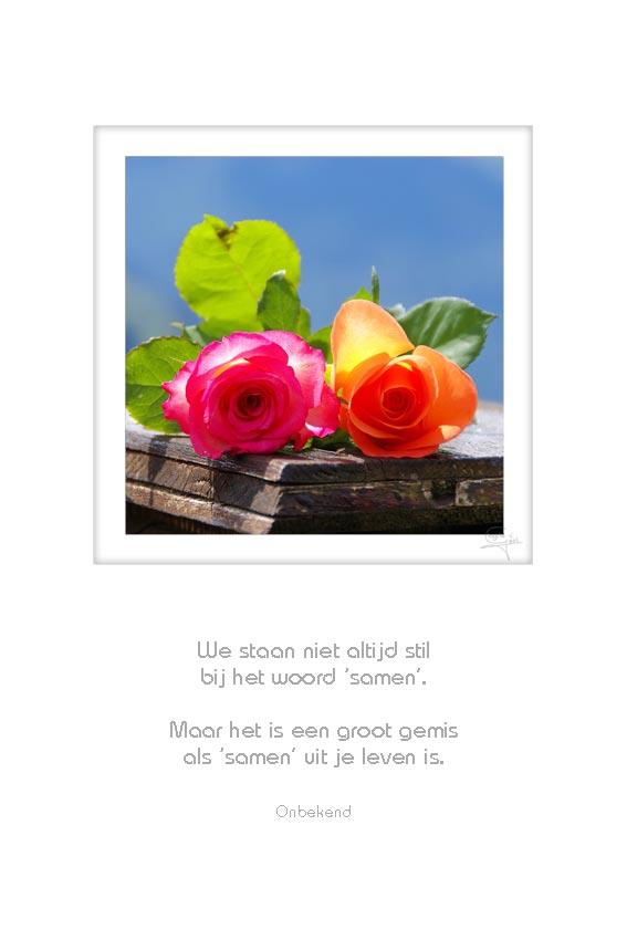 23-2-rozen-we-staan-niet-altijd-stil-onbekend-50x75cm-10052012-web