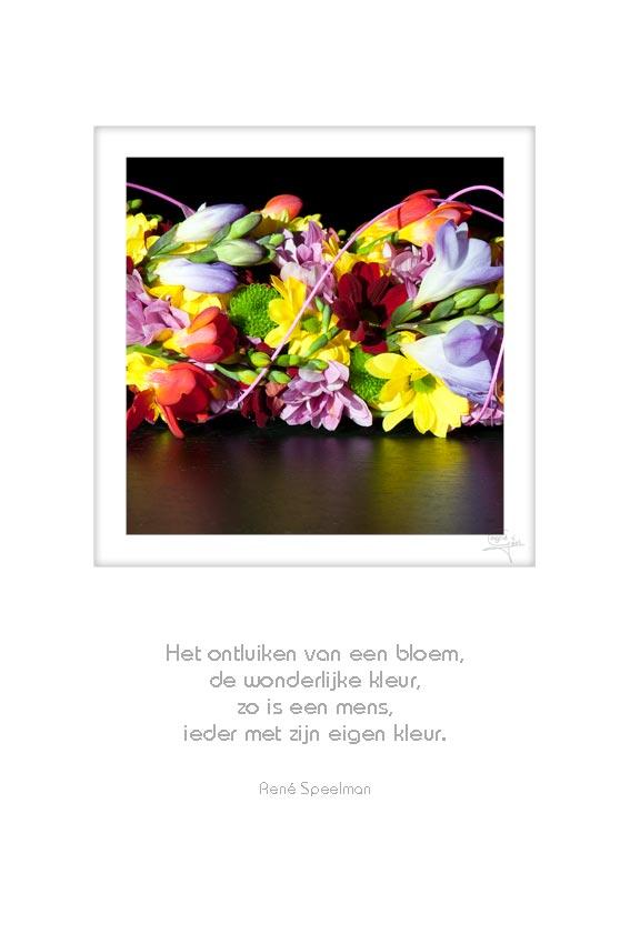 25-bloemen-het-ontluiken-van-een-rene-speelman-50x75cm-10052012-web