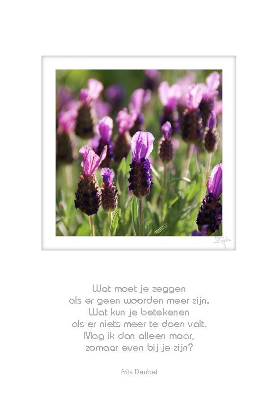 28-boeket-bloemen-wat-moet-je-zeggen-frits-deubel-50x75-cm-10052012-web