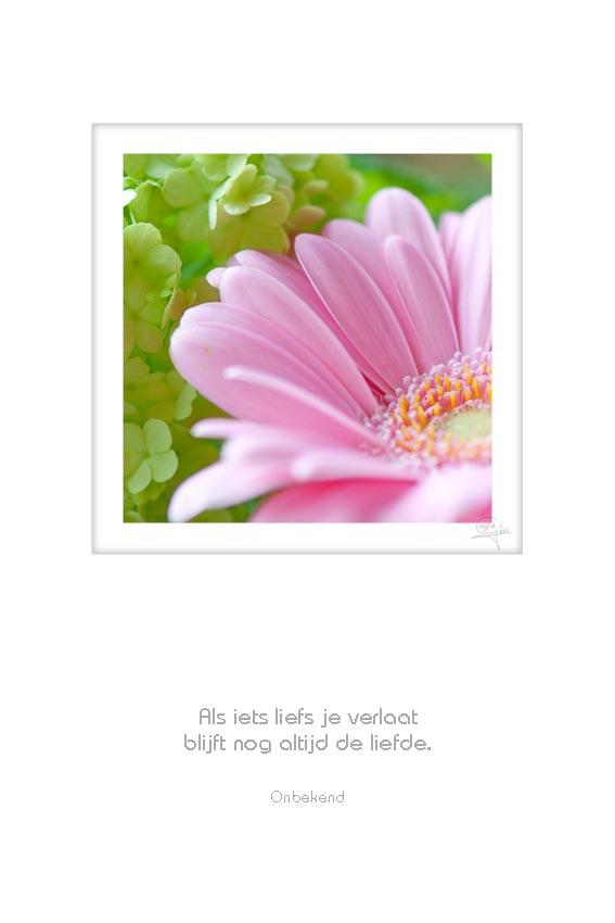 33-bloemen-als-iets-liefs-je-verlaat-onbekend-50x75cm-11052012-web