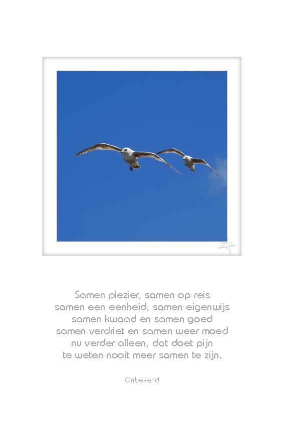38-2-vogels-samen-plezier,-samen-op-pad-onbekend-50x75cm-11052012-web